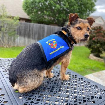 Autism Service Dog Vest