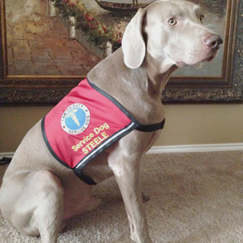 Caduceus Service Dog Vest