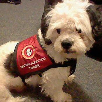Working Dog Seizure Vest