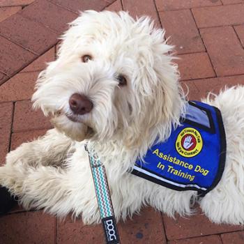 Assistance Dog Vests