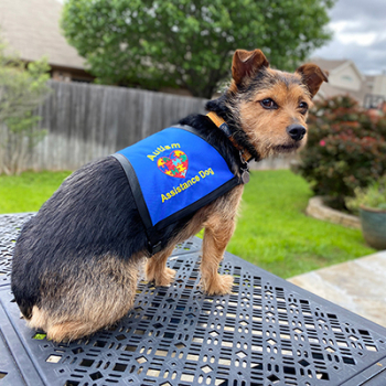 Service Dog Vests