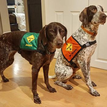 Special Needs Dog Vests