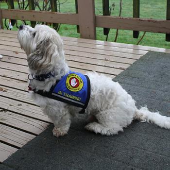 Dog Training Vests
