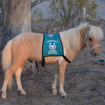 Therapy Horse Vests