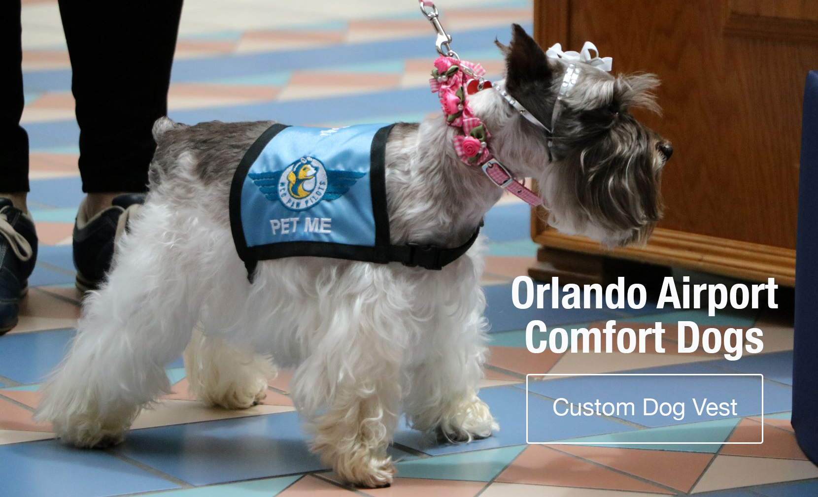 Assistance dog vest las vegas investment real estate agent